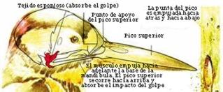 carpintero_esquema1