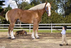 radar-thumbelina-largest-smallest-horse