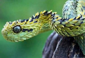serpiente-peluda-arbustos