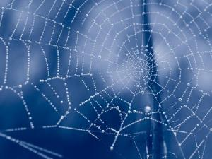 Tela-de-araña2